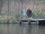 <p>Heron doing a spot of fishing</p>