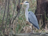 <p>Just myself and the heron </p>