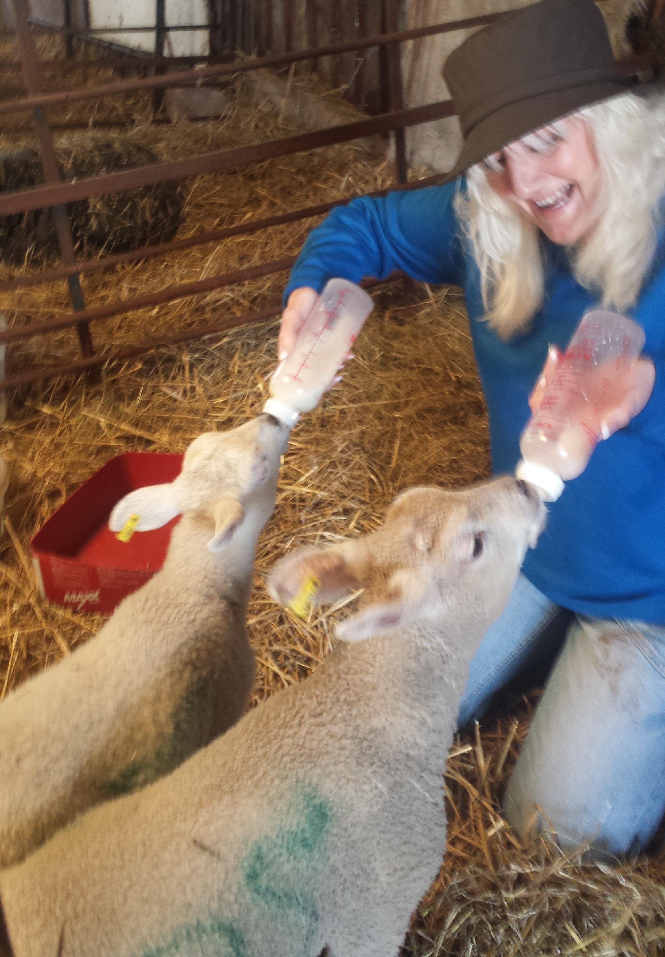 Sharon Bull feeding the lambs