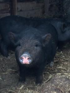 Piggy Rescue 3