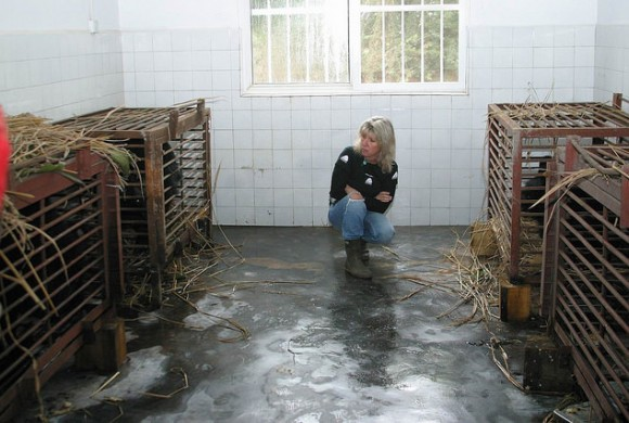 Jill Robinson - founder of Animals Asia with rescued bears.