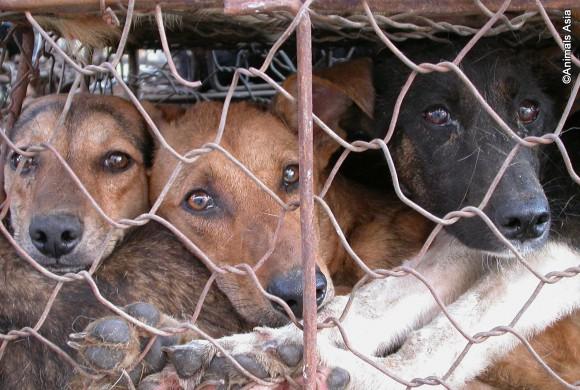 Please help Animals Asia to turn this around!