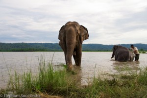 Elephants bathing in the river at dawn