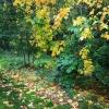 Autumn Delights