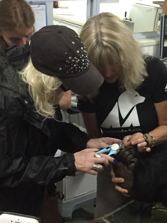Helping Jill to trim Mandela's claws.